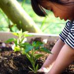 家庭菜園初心者の春植え!!プランターで育つおすすめ野菜と育て方!