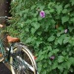 雨の日の自転車送迎の対策を知りたい!用意する物とみんなが実践している対策方法とは?!