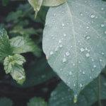 子供の送迎で雨…自転車を使う私の本音!レインコートは必須?梅雨以外は