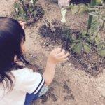 家庭菜園の土作り手順は?初心者に必要なものと良い土の見分け方は?