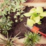 家庭菜園の冬は室内栽培が楽しい!初心者にこそやって欲しい方法とコツを伝授!