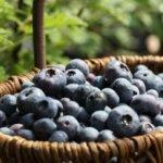 家庭菜園で果物はできる?初心者でも栽培できる簡単おすすめ5選!!