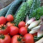 野菜の梅雨対策はどうすればいいの?家庭菜園における雨よけの方法!